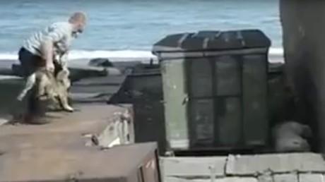 Extrême Orient russe : un homme lance un chien vivant à un ours polaire (Vidéo choquante)