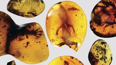 «Un monde perdu» : des chercheurs découvrent un lézard vieux de 99 millions d'années
