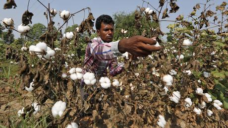 Inde : Monsanto appelé à accepter une baisse de ses royalties sur ses graines ou à quitter le marché
