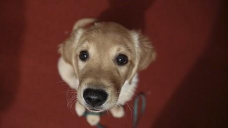 Robert Ménard s'apprête à ficher l'ADN des chiens pour lutter contre les déjections à Béziers