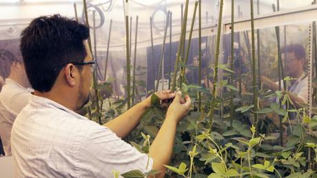 Un nouveau produit de Monsanto s'attaque aux nuisibles ayant développé une résistance aux pesticides