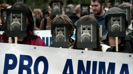 Défense des animaux : une «armée de singes» envahit les rues de Strasbourg (PHOTOS)