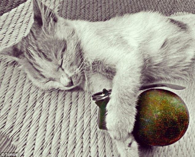 Fini les photos de chatons ? Le Don Juan de Daesh aurait été tué en Syrie (PHOTOS)