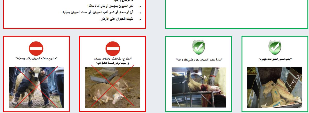 Abattage rituel : le ministère de l'agriculture sort un guide pratique pour l'Aïd-el-Kébir