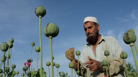 Paysan afghan dans un champ de pavot dans le district de Chaparhar, province du Nangarhar.