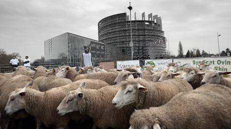 Manifestation devant le parlement européen en novembre 2014 ©FREDERICK FLORIN / AFP