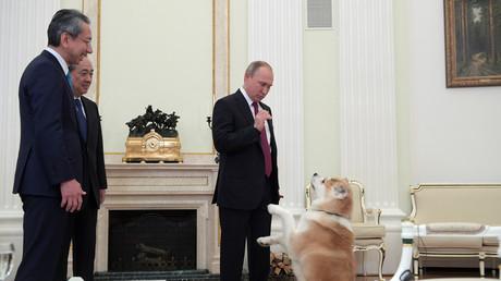Lors de son interview avec des médias japonais, Vladimir Poutine vient avec … une chienne ! (VIDEO)