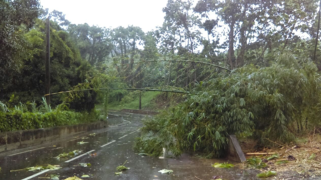 La Guadeloupe officiellement reconnue en situation de calamité agricole