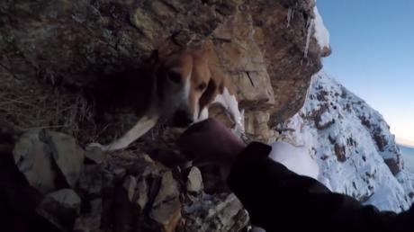 Si les sauveteurs n'ont rien pu faire pour ce chien coincé sur une falaise, il a flairé la solution