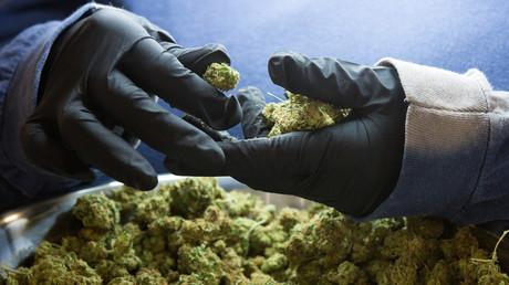Allemagne : les députés légalisent la consommation de cannabis à usage thérapeutique