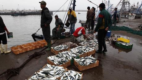 Des pêcheurs dans le port d'Agadir, Maroc.