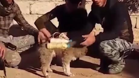 Le chien kamikaze présumé présenté par les PMU