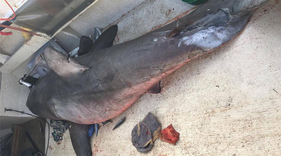 Australie : un requin de 2,7 mètres saute sur une petite embarcation