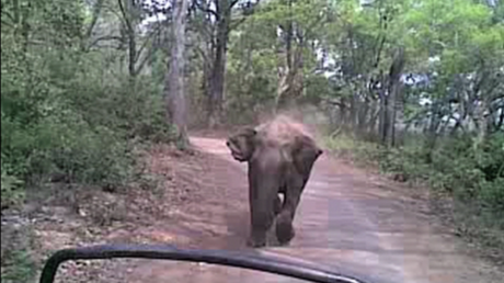 Course-poursuite : un éléphant talonne des touristes dans un parc national indien (VIDEO)