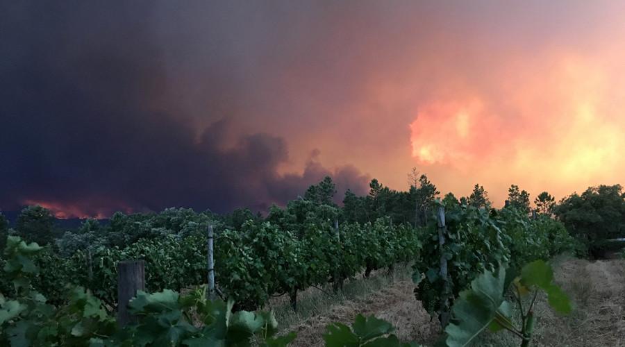 «La plus grande tragédie de la décennie» : 62 morts dans un incendie de forêt au Portugal (IMAGES)