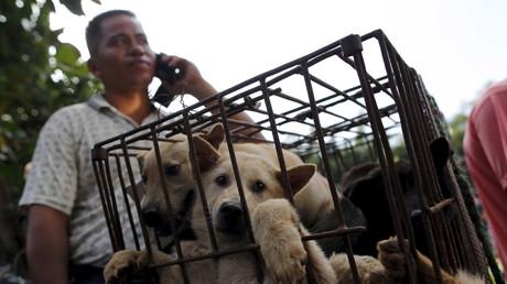 Après une vive polémique, Carrefour retire la viande de chien de ses magasins chinois