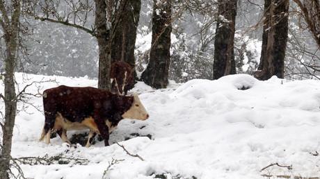Oui, 7% des Américains pensent que le lait chocolaté provient de vaches marron