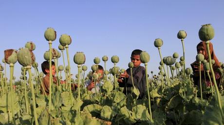 Un champ d'opium près de Jalalabad