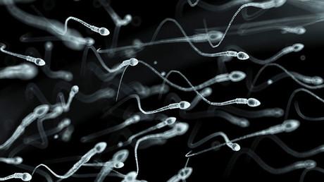 Chute dramatique du nombre de spermatozoïdes chez les Occidentaux