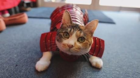 Préparez vos fauves au combat avec ces costumes de samouraï pour chiens et chats