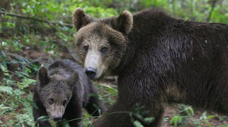Une ourse avec un ourson (image d'illustration)