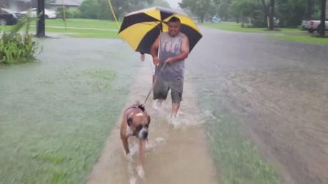 Des habitants de Houston fuient avec leurs chiens les inondations provoquées par la tempête Harvey