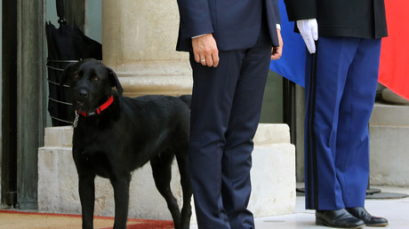 Nemo, le labrador des Macron, une nouvelle opération séduction des Français ?