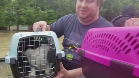 A Houston des habitants et leurs animaux de compagnie sauvés alors que les eaux continuent de monter