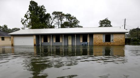 Au Texas, après l'ouragan, des colonies flottantes de fourmis de feu envahissent les eaux (IMAGES)