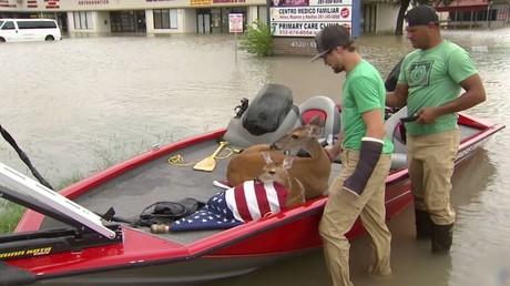 Le sauvetage des habitants et des animaux se poursuit au Texas