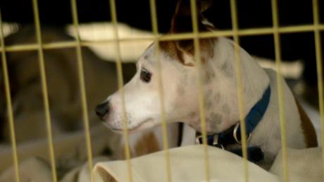 Des refuges pour animaux s'ouvrent après les incendies dévastateurs en Californie
