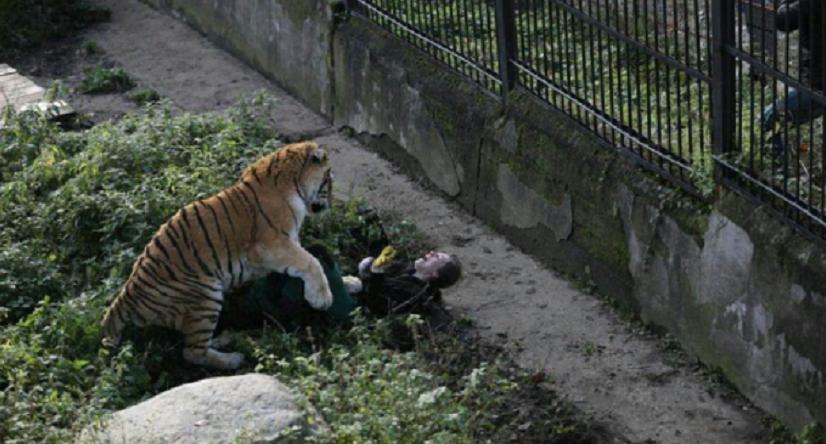 Un tigre attaque violemment une soigneuse dans un zoo en Russie (PHOTOS CHOC)