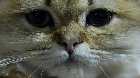 Un chat (image d'illustration).