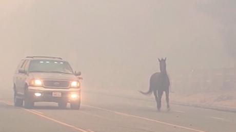 Un cheval prend l'autoroute pour échapper à un incendie de forêt