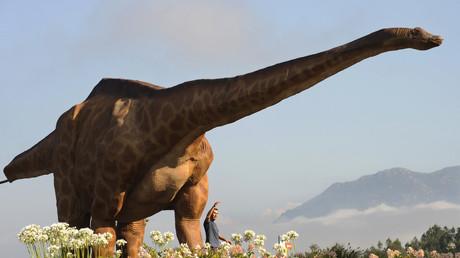Découverte d'une tique repue du sang d'un dinosaure