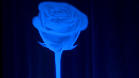 La rose bleue, emblème de la campagne de Marine Le Pen en 2017