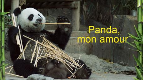 Panda, mon amour