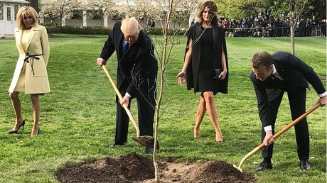 Mauvais présage ? L'arbre de l'amitié planté par Macron et Trump a déjà disparu... (IMAGES)