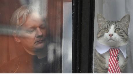 Le chat d'Assange au cœur des nouvelles restrictions imposées à son maître par l'Equateur