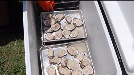 Concours à la Nouvelle-Orléans : 528 huîtres en 8 minutes