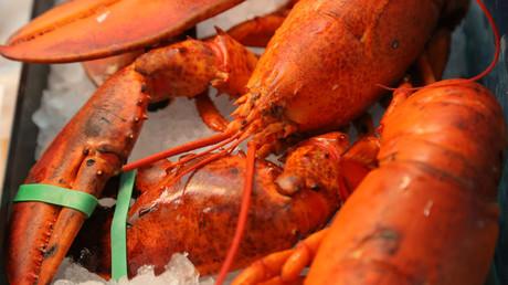 Le homard de la honte : une ambassade d'Israël moquée pour avoir (mal) dissimulé un repas non casher