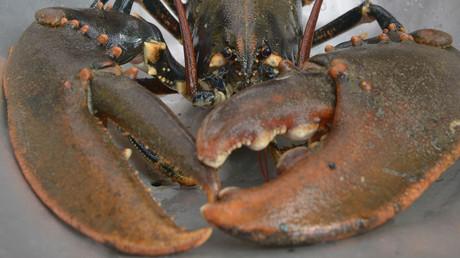 Le homard a bon dos depuis l'affaire De Rugy (image d'illustration).