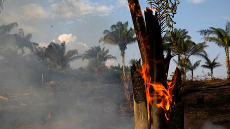 Une forêt brûle dans l'Etat d'Amazonas au Brésil, le 20 août 2019.