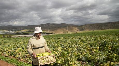Agriculteur palestinien dans la vallée du Jourdain.