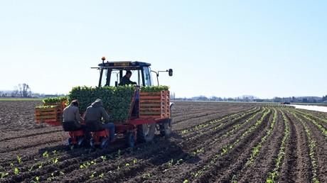 Le ministre de l'Agriculture Didier Guillaume a lancé un appel, le 24 mars 2020, pour que les Français n'ayant «plus d'activité» aillent aider les agriculteurs dans les champs.