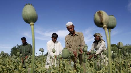 Ouvriers agricoles dans un champs de pavot près de Jalalabad en Afghanistan, photographiés en octobre 2016 (illustration).