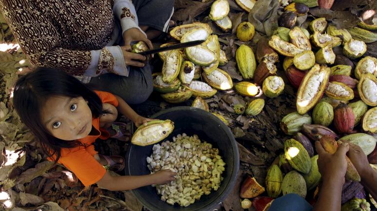 Das Erste: на плантациях какао в Африке по-прежнему активно задействуют детский труд