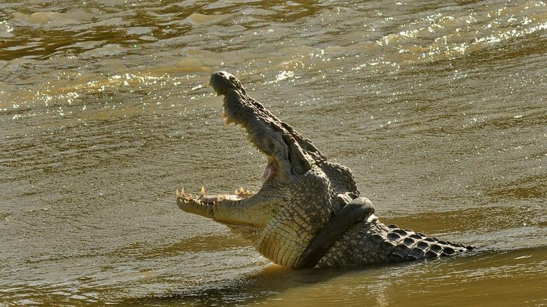 Times: древние крокодилы ходили на двух ногах