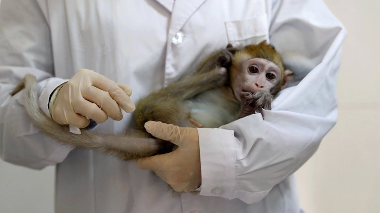 SRF: в Швейцарии разрешили референдум о внесении прав обезьян в конституцию