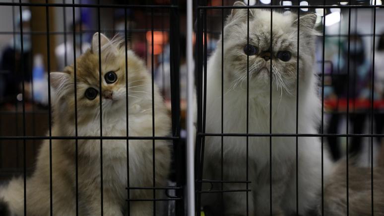 BFM TV: французские депутаты не поддержали идею признать кошек вредителями